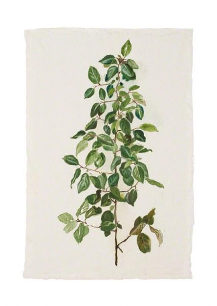 """Eleagnus x ebbingei (russian olive)"", Marie-Claire Raoul"