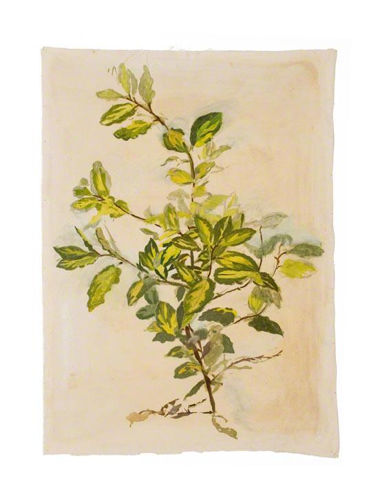 """Limelight elaeagnus"", Marie-Claire Raoul"