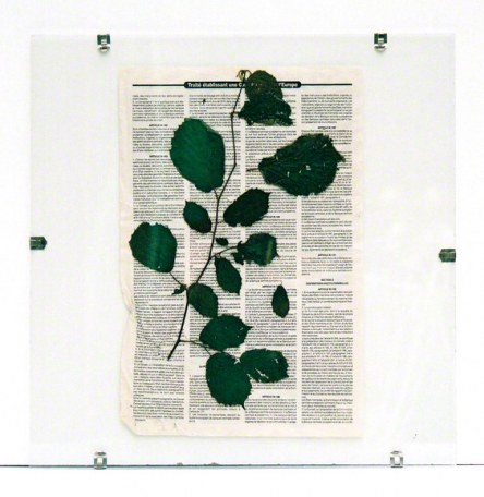 """Foliage from Kerzafloch dried on a """"Le Monde Diplomatique"""" newspaper sheet, Marie-Claire Raoul"""