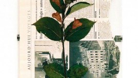 Fleur de Kerzafloc'h séchée sur journal 'Le Monde'