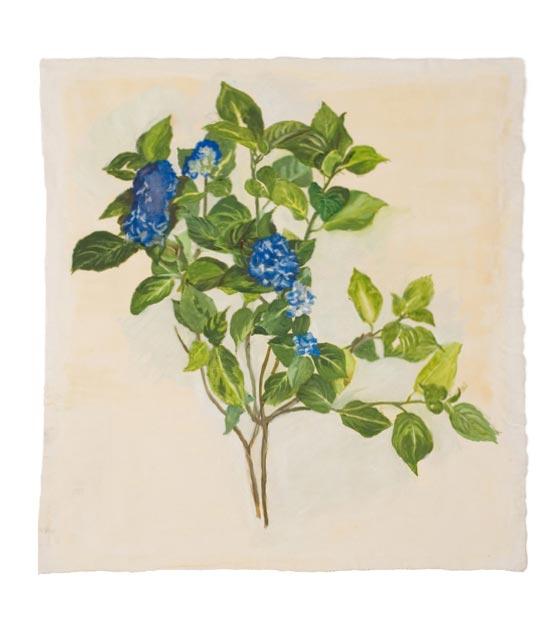 """Hydrangea"", Marie-Claire Raoul"