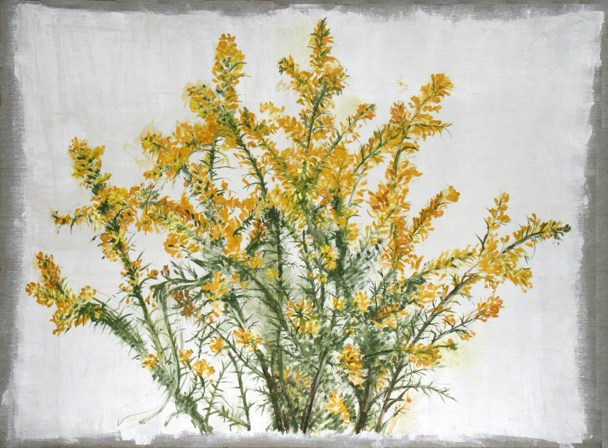 Ulex flowers from Kerzafloc'h, oil on linen, Marie-Claire Raoul