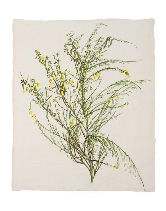 Genêt de Kerzafloch, peinture acrylique sur soie, Marie-Claire Raoul