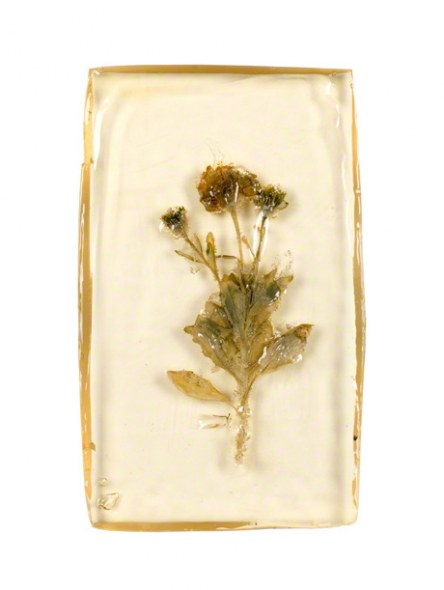 Osteospermum inserted in a resin block, 14th June 2005, Marie-Claire Raoul
