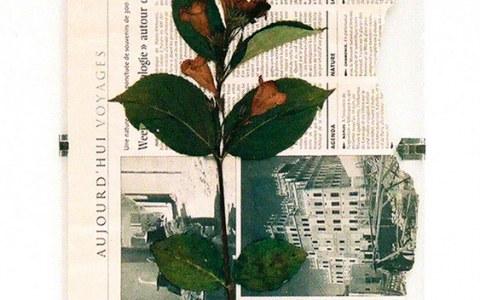 Fleur de Kerzafloc'h séchée sur journal 'Le Monde', Marie-Claire Raoul