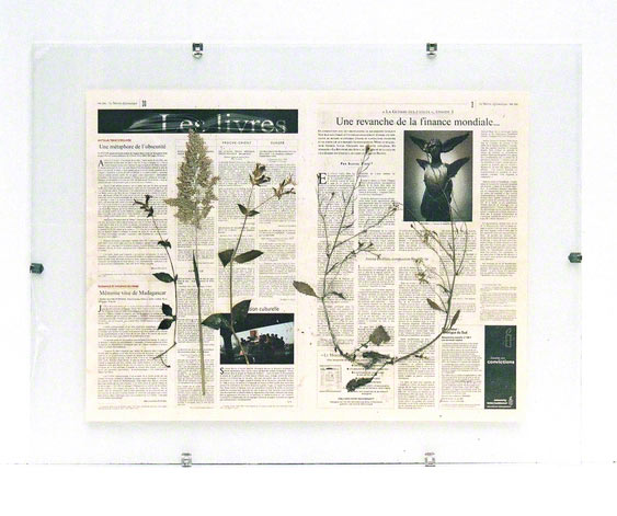 "5 flowers from Kerzafloch dried on a ""Le Monde Diplomatique"" newspaper sheet, Marie-Claire Raoul"