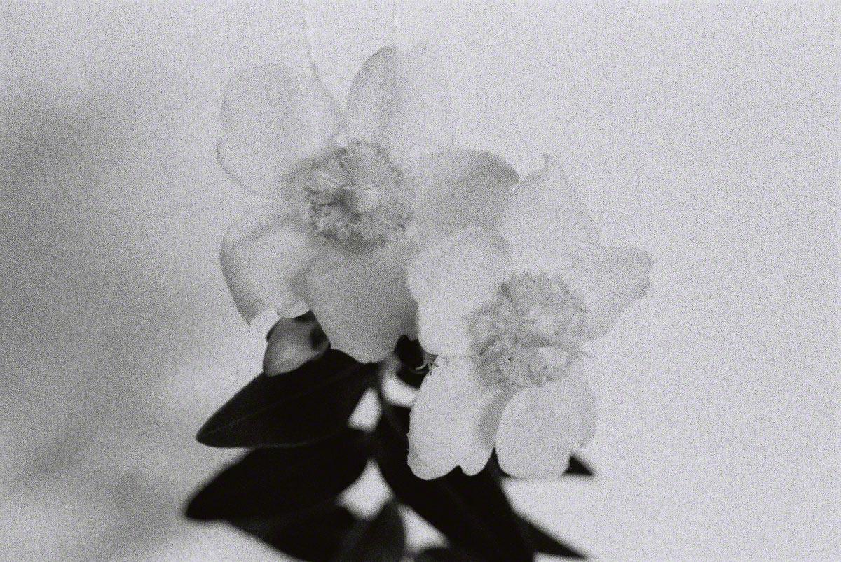 Millepertuis, dans l'atelier, noir et blanc, Marie-Claire Raoul