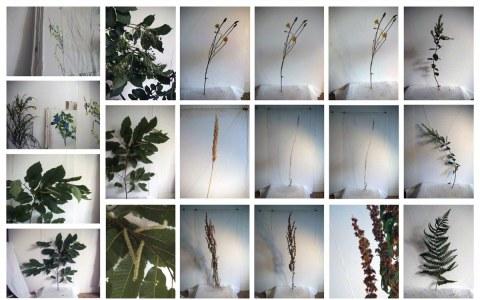 Fleurs et feuillages de Kerzafloc'h dans l'atelier, Marie-Claire Raoul