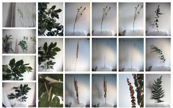 Fleurs et feuillages de Kerzafloc'h dans l'atelier