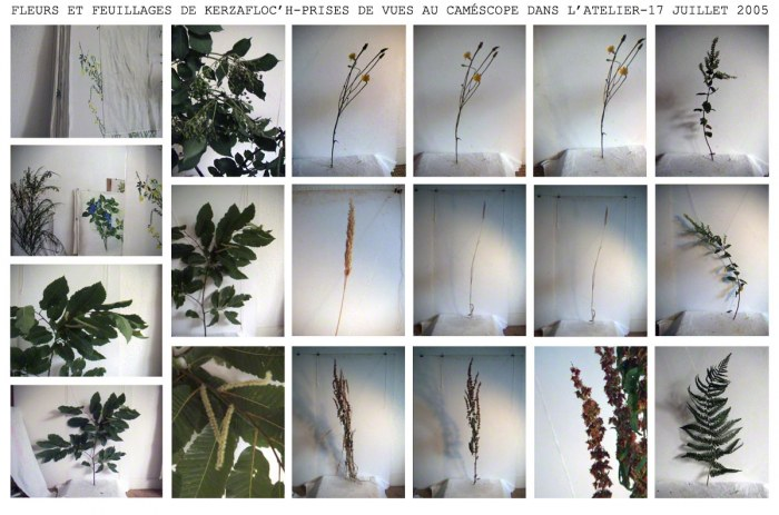 Flowers and foliage from Kerzafloc'h, montage of 19 digital pictures printed on hessian