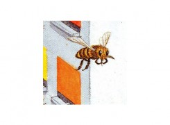 Google bee, picture found on google