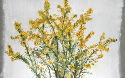 Ajoncs de Kerzafloch, huile sur toile de lin, Marie-Claire Raoul
