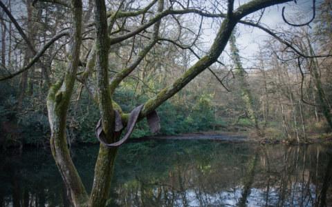 Irène, Bois de Kerhoual, 17 janvier 2017, parcours photographique